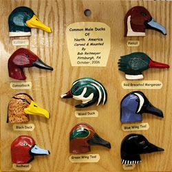 Male Ducks Board