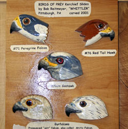 Birds of Prey Slides Board